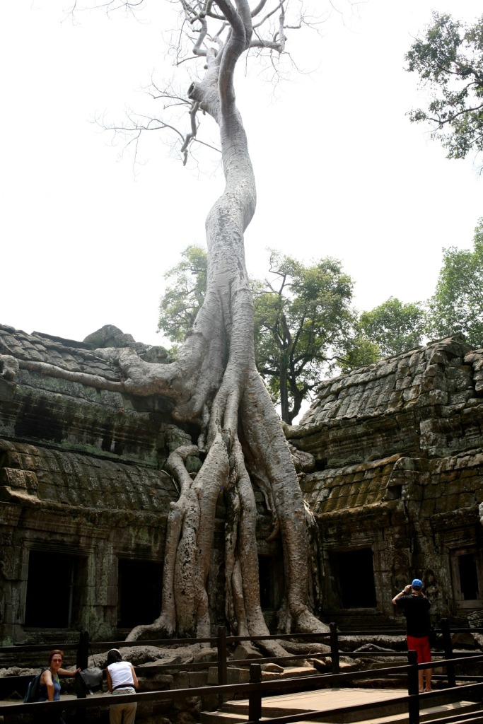 The roots at Ta Prohm